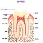 歯を抜かずに残せるための条件|香川県 高松市の歯の神経治療