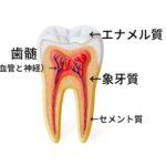 死んでしまった歯の神経が生き返ることはありますか?というご質問