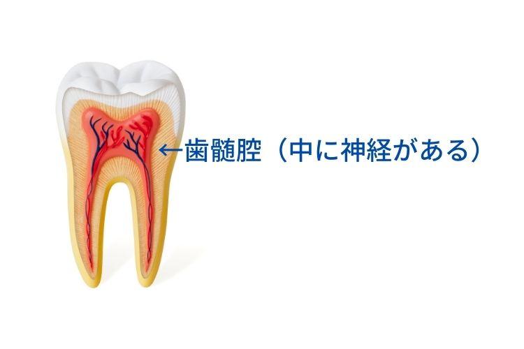 歯の神経を残す治療なら高松市の吉本歯科医院